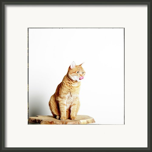 Red Tomcat Sitting On Wooden Table Framed Print By Marceltb