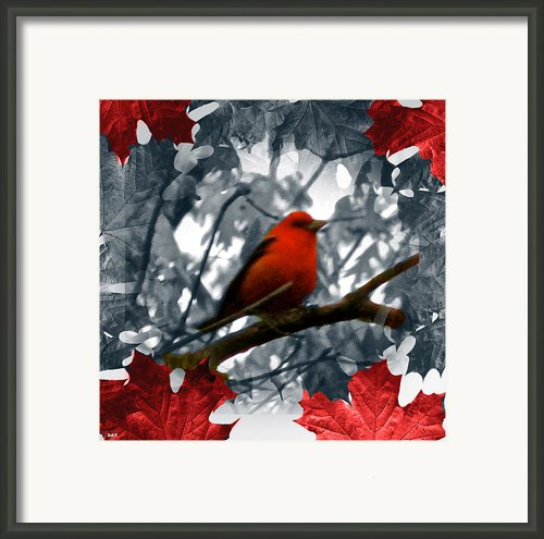 Red Wild Bird Framed Print By Debra     Vatalaro