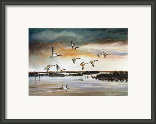 Redheads In Flight Framed Print By Raymond Edmonds