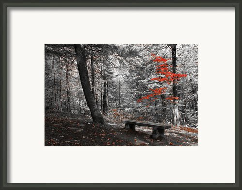 Reds In The Woods Framed Print By Aimelle