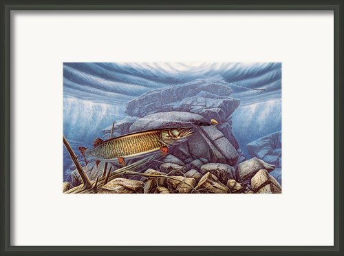 Reef King Musky Framed Print By Jq Licensing