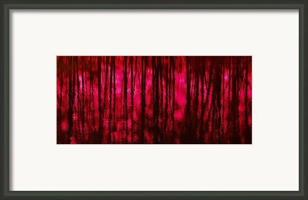 Reflections Framed Print By David Lane