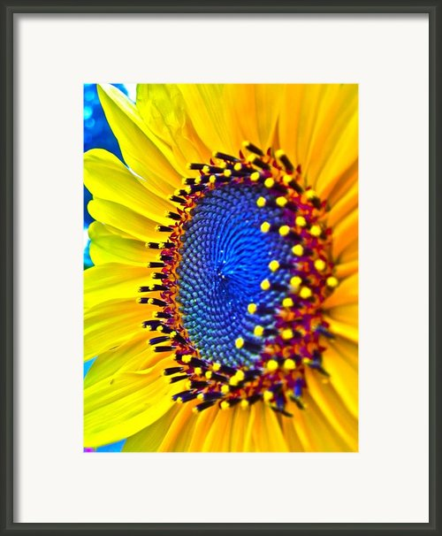 Rejoice Framed Print By Gwyn Newcombe