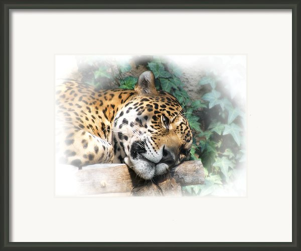 Relaxing 2 Framed Print By Ernie Echols