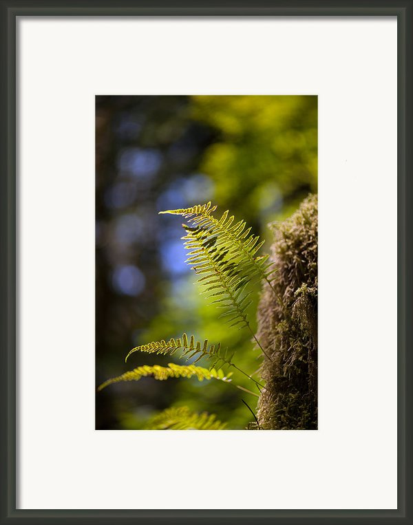 Renewal Ferns Framed Print By Mike Reid