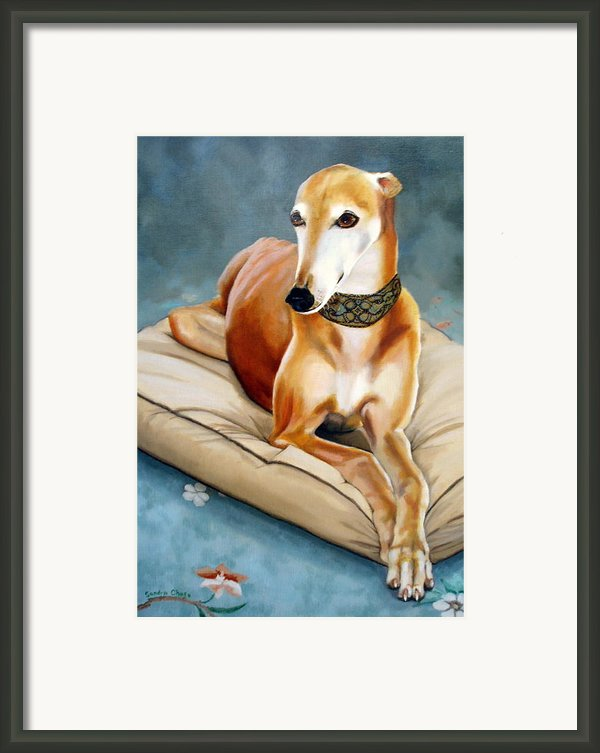 Rescued Greyhound Framed Print By Sandra Chase