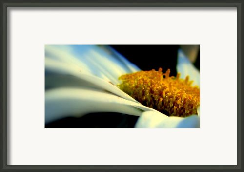 Rest Framed Print By Louie Rochon