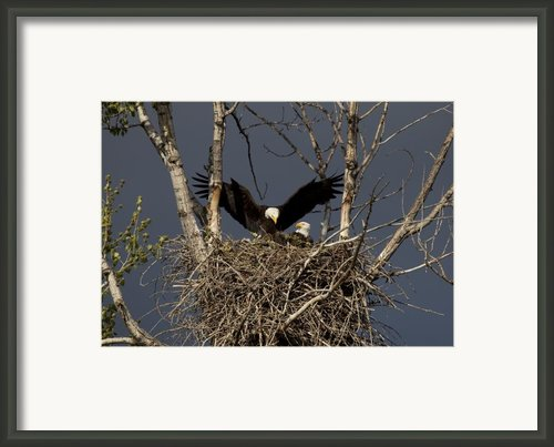 Returning Home To The Nest Framed Print By Mike  Dawson