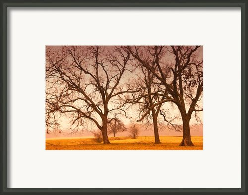 Revelation Framed Print By Iris Greenwell