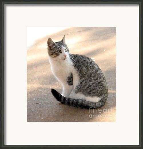 Rex Framed Print By Cheryl Poland