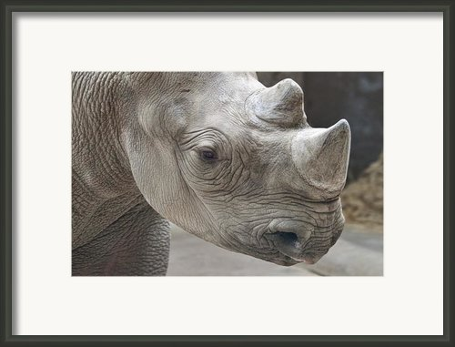 Rhinoceros Framed Print By Tom Mc Nemar