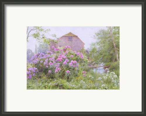 Rhododendrons By A Watermill Framed Print By George Marks
