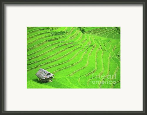 Rice Field Terraces Framed Print By Mothaibaphoto Prints