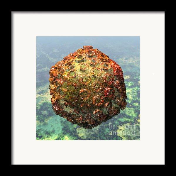 Rift Valley Fever Virus 1 Framed Print By Russell Kightley