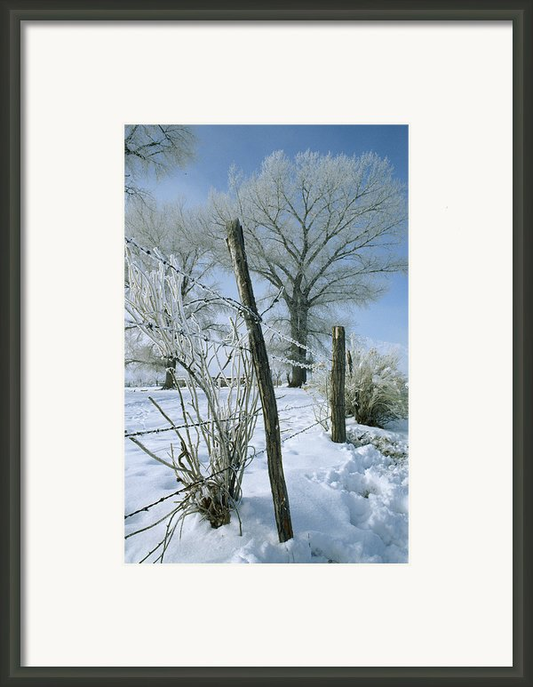 Rime From Rare Fog Coats Fence Framed Print By Gordon Wiltsie