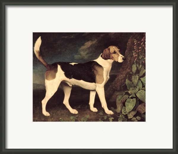 Ringwood Framed Print By George Stubbs