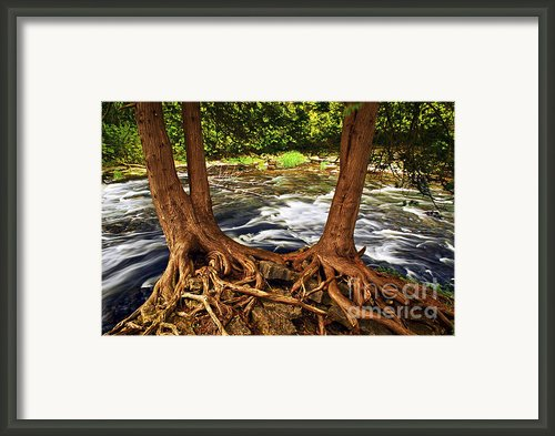 River And Trees Framed Print By Elena Elisseeva