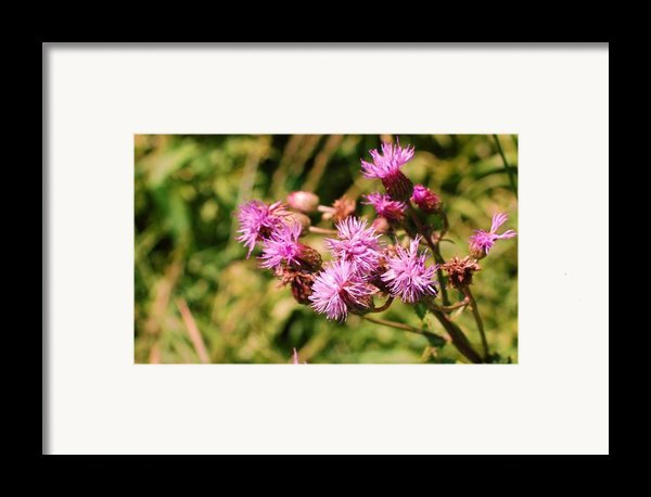 Roadside Beauty Framed Print By Jame Hayes