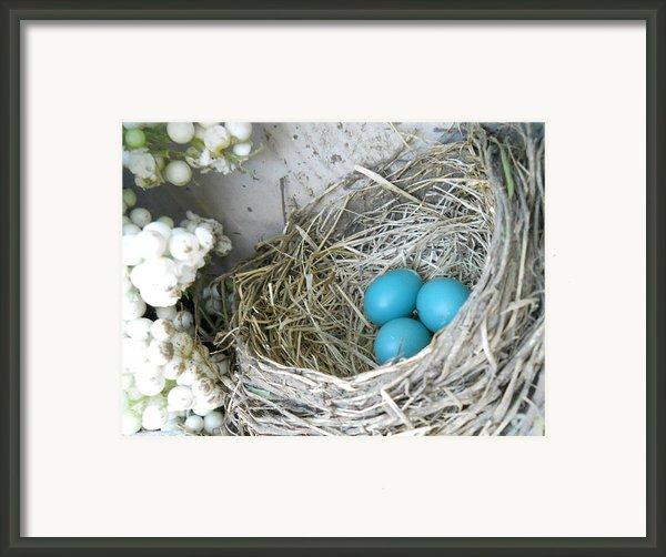 Robin Eggs In A Wreath Framed Print By Marqueta Graham