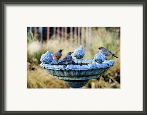Robins On Birdbath Framed Print By Barbara Rich
