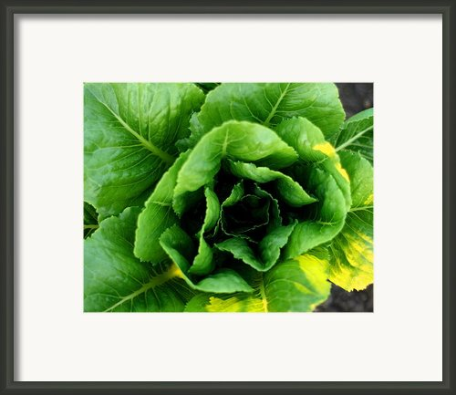 Romaine Framed Print By Angela Rath
