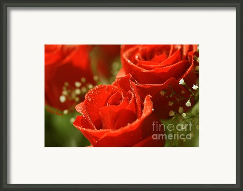 Romance Framed Print By Cheryl Young