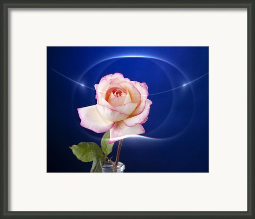 Romance Rose Framed Print By M K  Miller