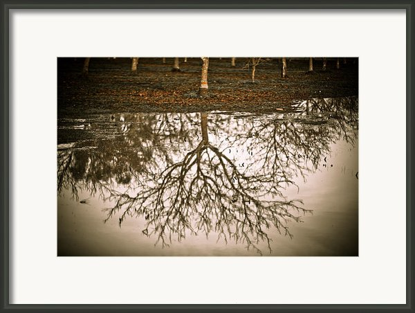 Roots Framed Print By Derek Selander