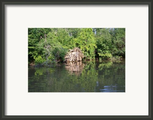 Roots In The Stream Framed Print By Deborah Macquarrie
