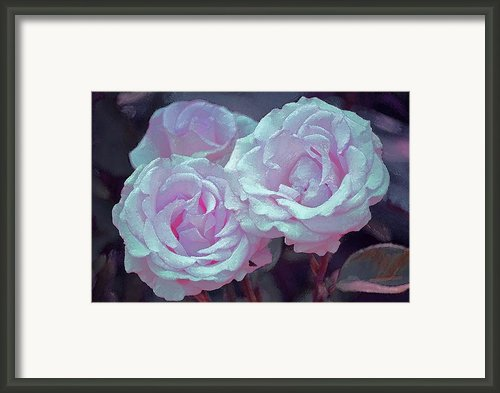 Rose 118 Framed Print By Pamela Cooper