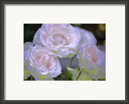 Rose 120 Framed Print By Pamela Cooper