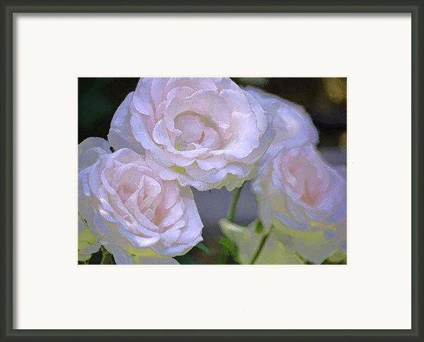 Rose 120 Framed Print By Pamela Cooper