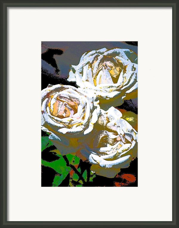 Rose 126 Framed Print By Pamela Cooper