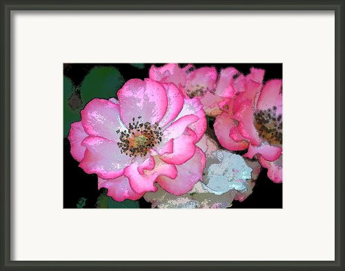 Rose 129 Framed Print By Pamela Cooper