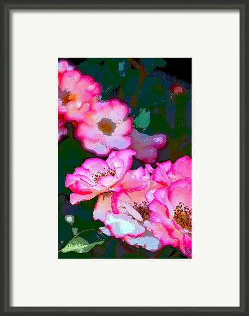 Rose 130 Framed Print By Pamela Cooper
