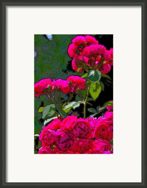 Rose 135 Framed Print By Pamela Cooper