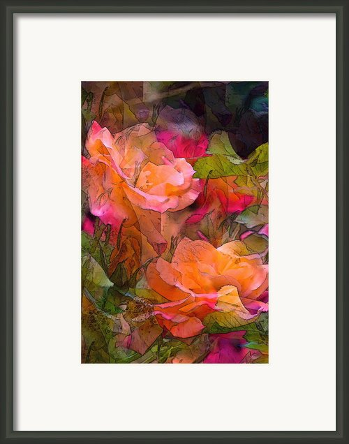 Rose 146 Framed Print By Pamela Cooper