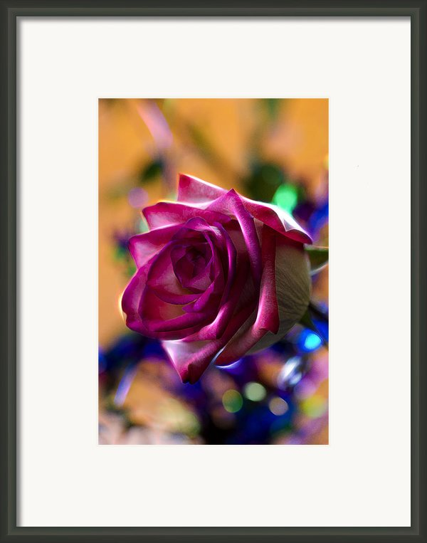 Rose Celebration Framed Print By Bill Tiepelman