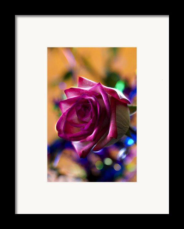 Rose Celebration Framed Print By Bill Tiepelman