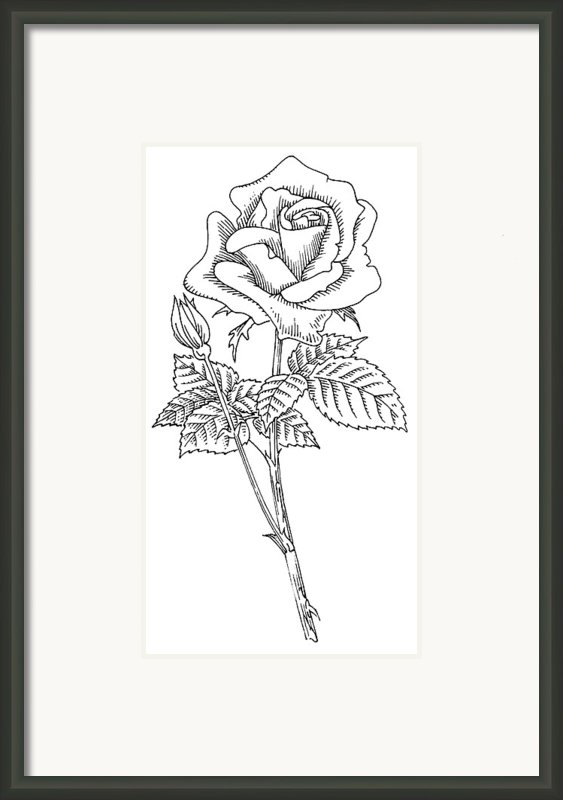 Rose, Lino Print Framed Print By Gary Hincks