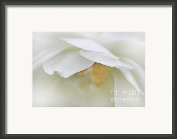 Rose Petals Abstract Macro Framed Print By Jennie Marie Schell