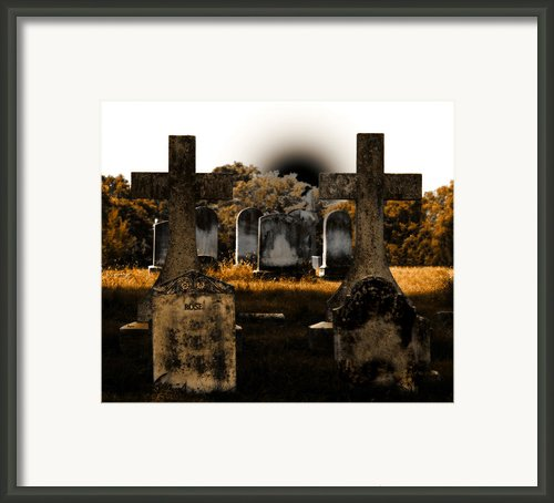 Rose Framed Print By Steven  Digman