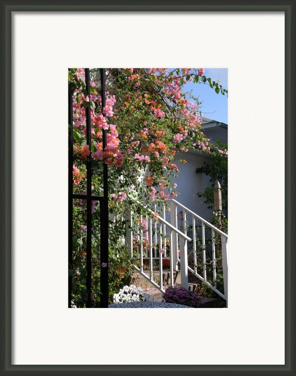 Roses In Winter Framed Print By Susanne Van Hulst