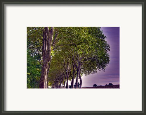 Route De Castres Framed Print By Ed Gold