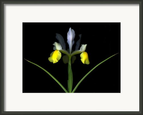 Royalty Framed Print By Christian Slanec