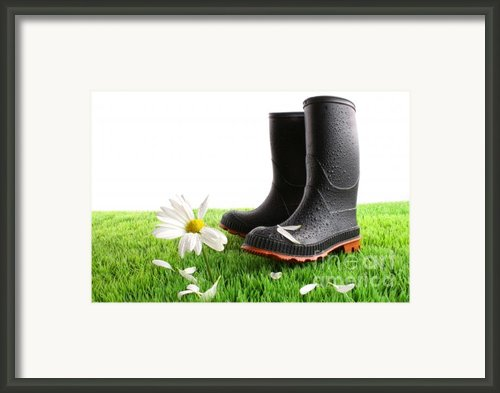 Rubber Boots With Daisy In Grass Framed Print By Sandra Cunningham