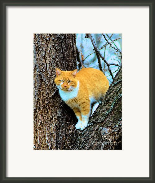 Rudy The Escape Artist Framed Print By Cheryl Poland