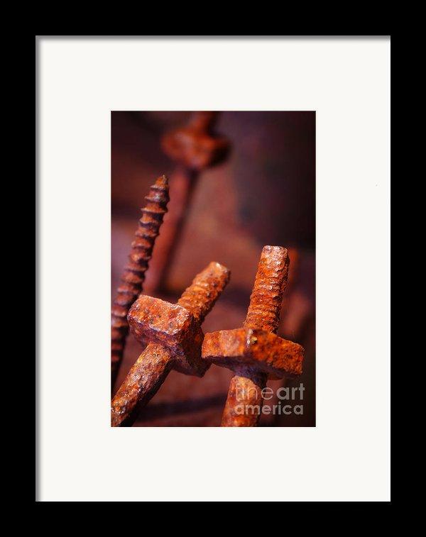 Rusty Screws Framed Print By Carlos Caetano