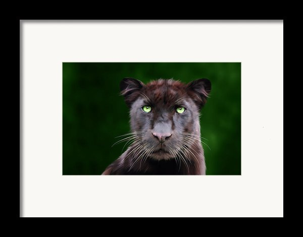 Saber Framed Print By Big Cat Rescue