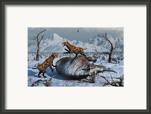 Sabre-toothed Tigers Battle Framed Print By Mark Stevenson